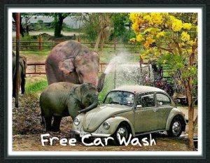 beetle car wash