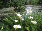 Their pond at Quillivro